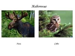 Животные Лось Сова