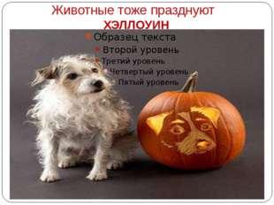 Животные тоже празднуют ХЭЛЛОУИН
