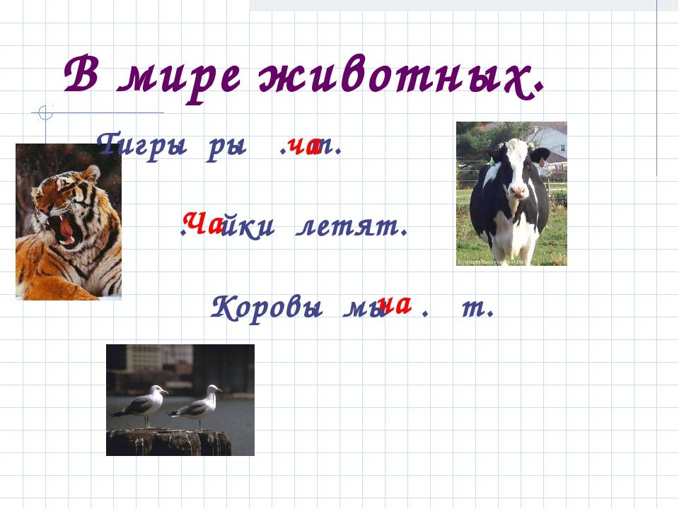 В мире животных. Тигры ры . т. . йки летят. Коровы мы . т. ча ча Ча