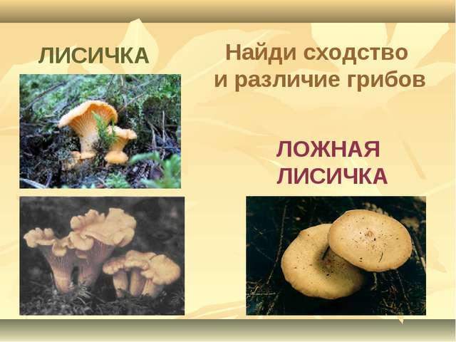 ЛОЖНАЯ ЛИСИЧКА ЛИСИЧКА Найди сходство и различие грибов