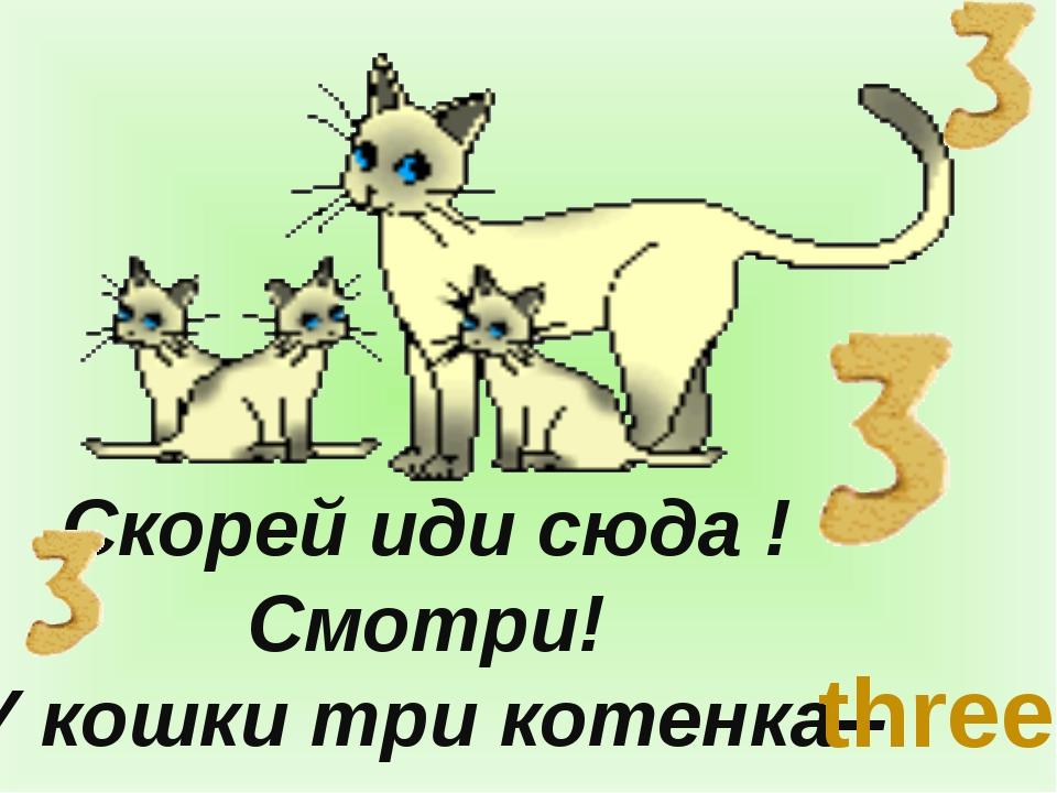 Скорей иди сюда ! Смотри! У кошки три котенка-- three