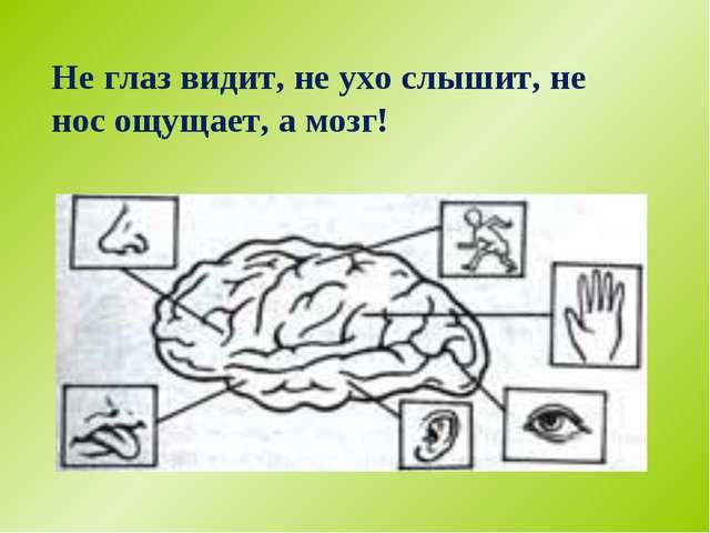 Не глаз видит, не ухо слышит, не нос ощущает, а мозг!