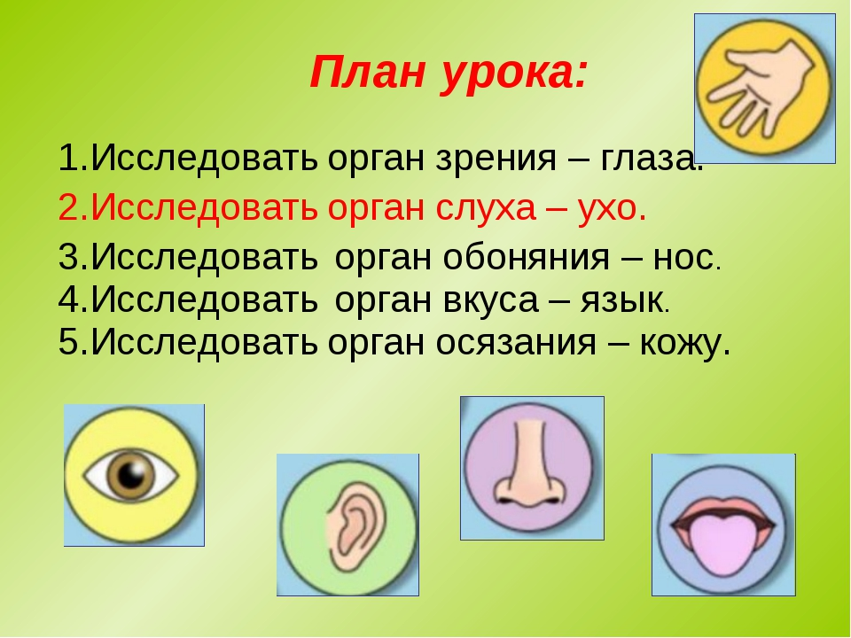 План урока: 1.Исследовать орган зрения – глаза. 2.Исследовать орган обоняния...