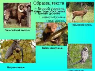 Летучие мыши Каменная куница Сова-неясыть Фауна горного Крыма Крымский олень