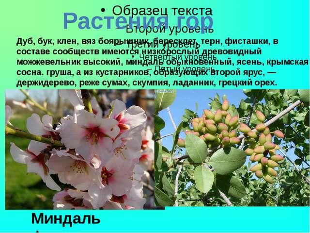 Растения гор Дуб, бук, клен, вяз боярышник, бересклет, терн, фисташки, в сос...