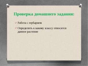 Проверка домашнего задания: Работа с гербарием Определить к какому классу отн
