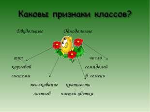 Двудольные Однодольные тип число корневой семядолей системы в семени жилкова