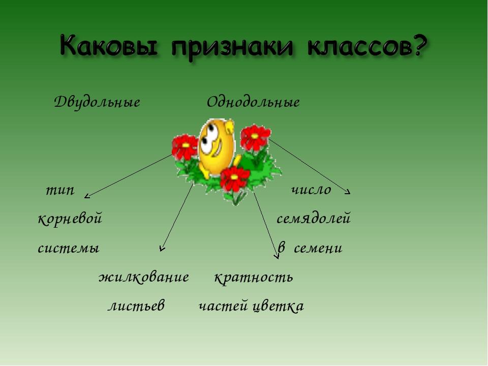 Двудольные Однодольные тип число корневой семядолей системы в семени жилкова...