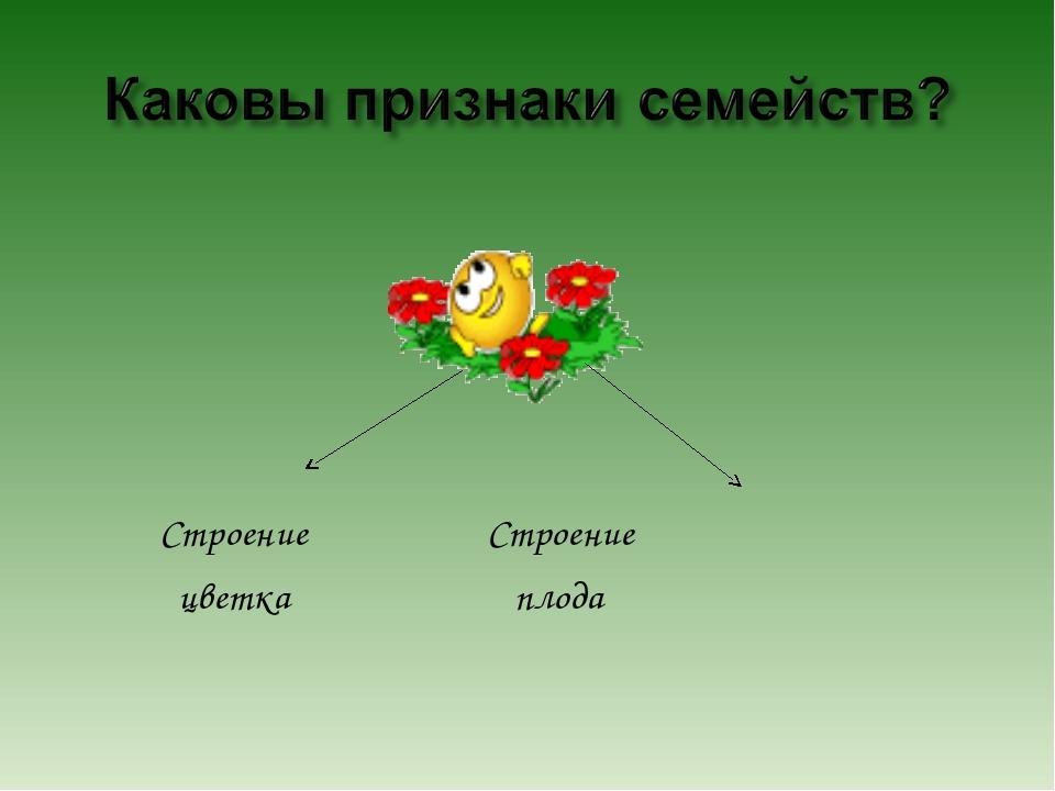 Строение Строение цветка плода