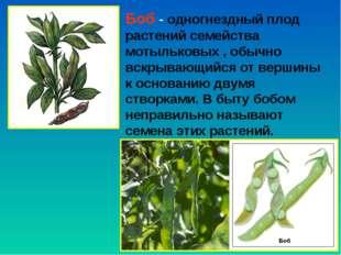 Боб - одногнездный плод растений семейства мотыльковых , обычно вскрывающийся