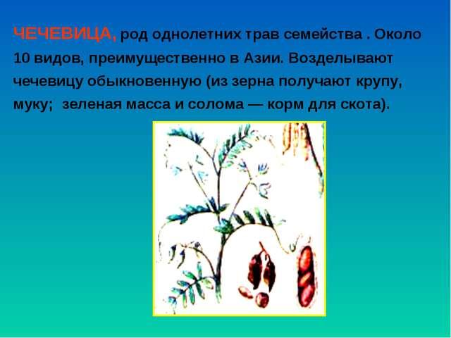 ЧЕЧЕВИЦА, род однолетних трав семейства . Около 10 видов, преимущественно в А...