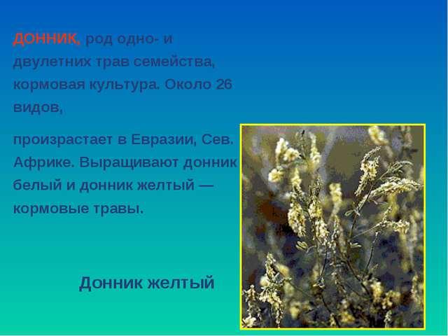 ДОННИК, род одно- и двулетних трав семейства, кормовая культура. Около 26 вид...