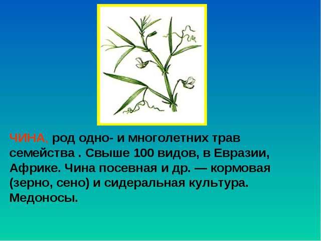 ЧИНА, род одно- и многолетних трав семейства . Свыше 100 видов, в Евразии, Аф...