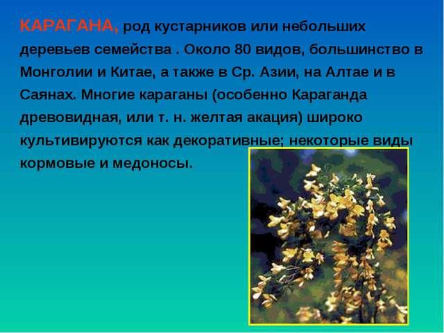 КАРАГАНА, род кустарников или небольших деревьев семейства . Около 80 видов,...