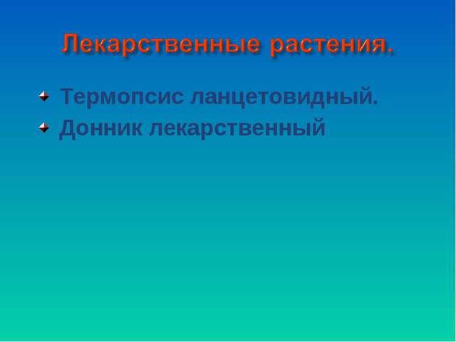 Термопсис ланцетовидный. Донник лекарственный