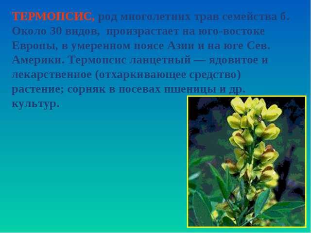 ТЕРМОПСИС, род многолетних трав семейства б. Около 30 видов, произрастает на...