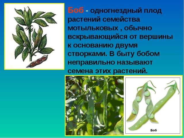 Боб - одногнездный плод растений семейства мотыльковых , обычно вскрывающийся...