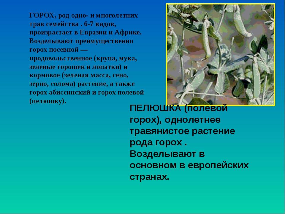 ГОРОХ, род одно- и многолетних трав семейства . 6-7 видов, произрастает в Евр...