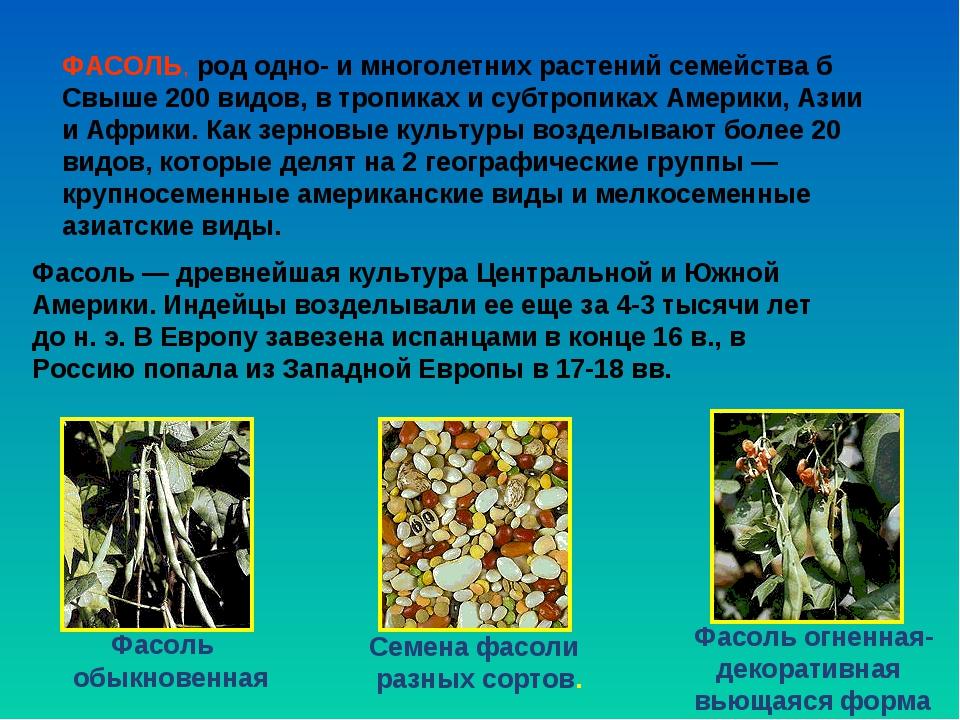 Фасоль обыкновенная Фасоль огненная- декоративная вьющаяся форма Семена фасо...