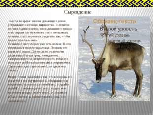 Сыроядение Ханты во время заколов домашнего оленя, устраивают настоящее пирше