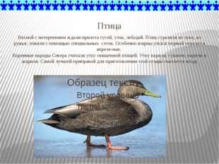 Птица Весной с нетерпением ждали прилета гусей, уток, лебедей. Птиц стреляли