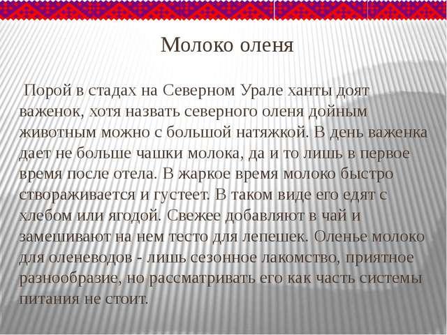 Молоко оленя Порой в стадах на Северном Урале ханты доят важенок, хотя назват...