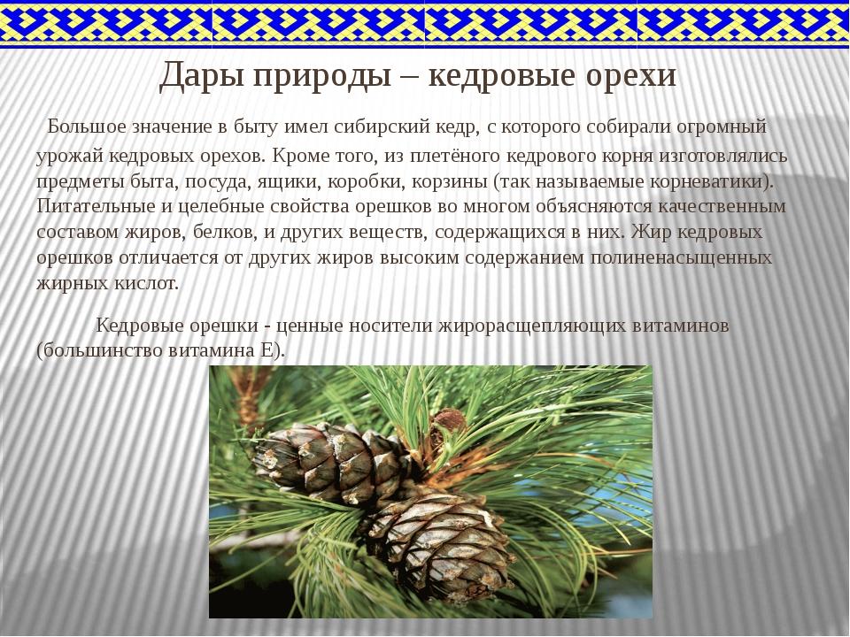 Дары природы – кедровые орехи Большое значение в быту имел сибирский кедр, с...