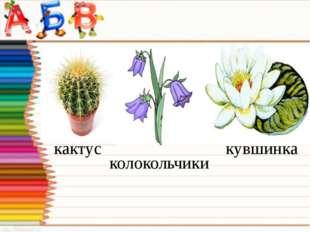 кактус колокольчики кувшинка