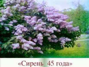 «Сирень 45 года»