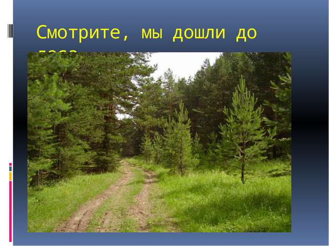 Смотрите, мы дошли до леса.