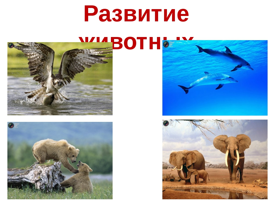 Развитие животных