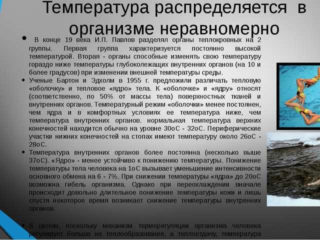 Температура распределяется в организме неравномерно В конце 19 века И.П. Павл...