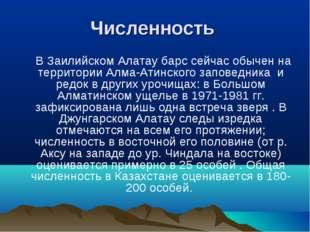 Численность В Заилийском Алатау барс сейчас обычен на территории Алма-Атинско