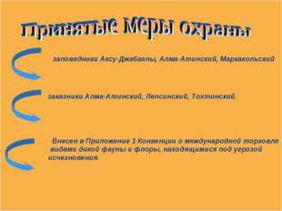 заповедники Аксу-Джабаглы, Алма-Атинский, Маркакольский заказники Алма-Атинс