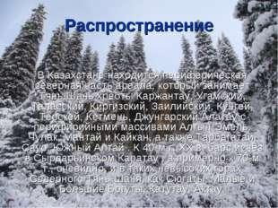 Распространение В Казахстане находится периферическая северная часть ареала,