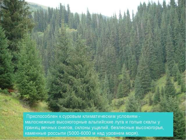 Доходит до Батана Приспособлен к суровым климатическим условиям - малоснежные...