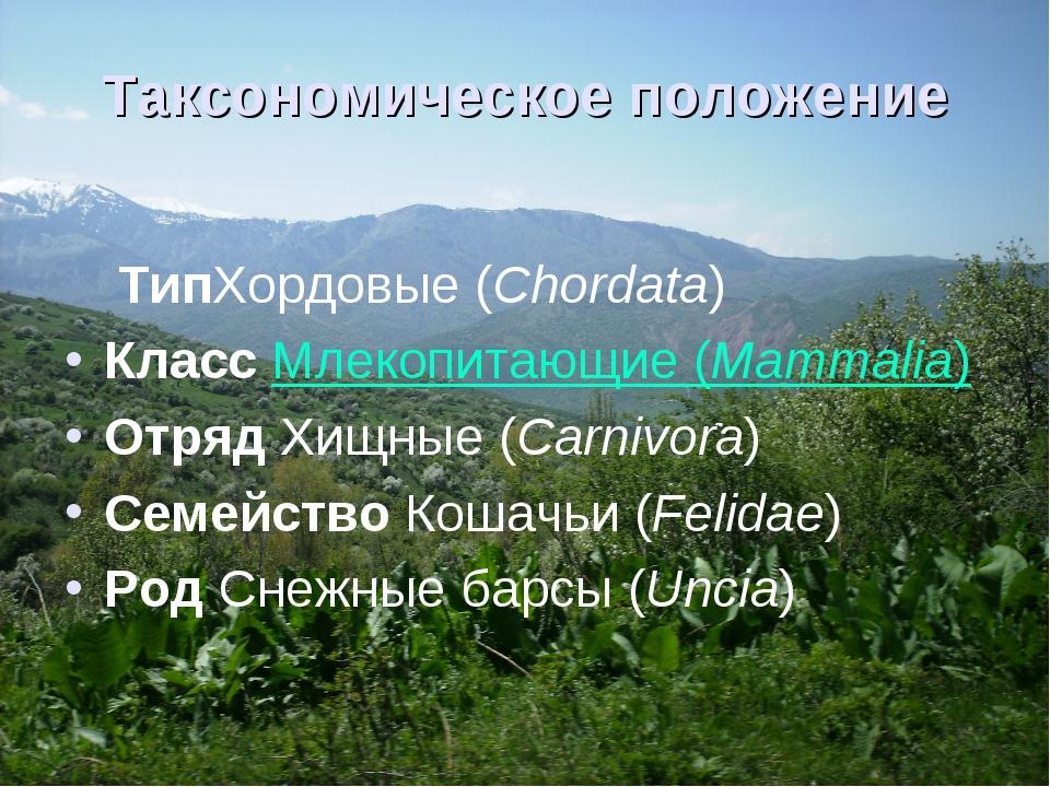 Таксономическое положение ТипХордовые(Chordata) Класс Млекопитающие(Mammali...