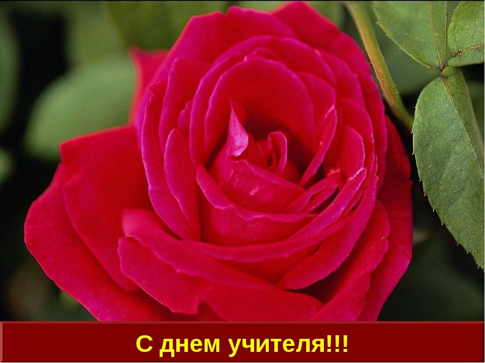 С днем учителя!!!