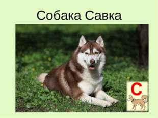 Собака Савка
