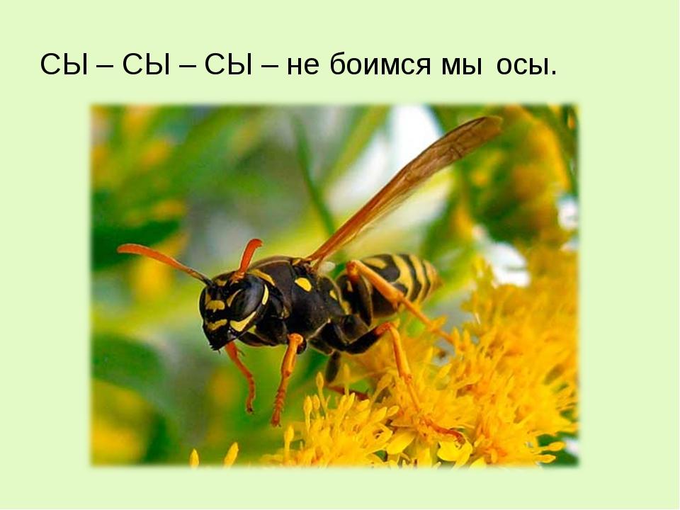 СЫ – СЫ – СЫ – не боимся мы осы.