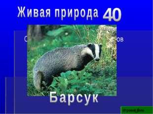 Игровое поле Самый чистоплотный зверь лесов Кузбасса
