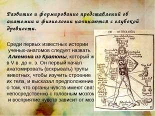 Развитие и формирование представлений об анатомии и физиологии начинаются с г