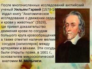 После многочисленных исследований английский ученый Уильям Гарвей (1578-1657)
