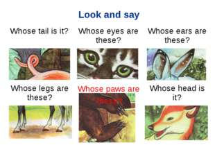 Look and say Whose paws are these? Whose tail is it?	Whose eyes are these?	W