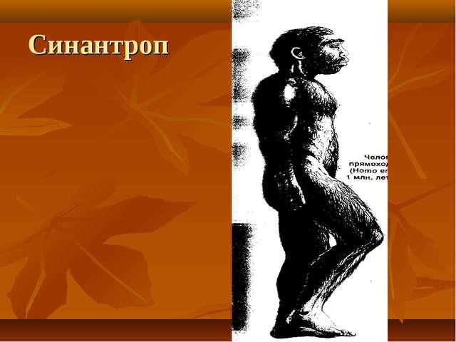 Синантроп
