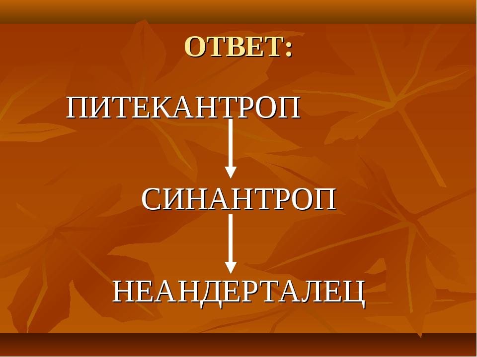 ОТВЕТ: ПИТЕКАНТРОП СИНАНТРОП НЕАНДЕРТАЛЕЦ