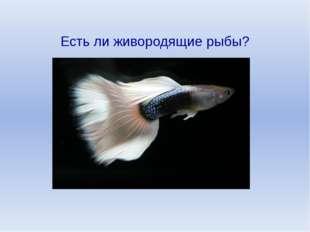 Есть ли живородящие рыбы?
