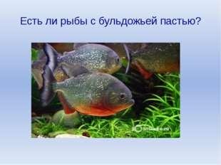 Есть ли рыбы с бульдожьей пастью?