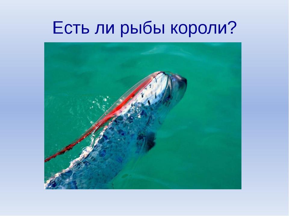 Есть ли рыбы короли?