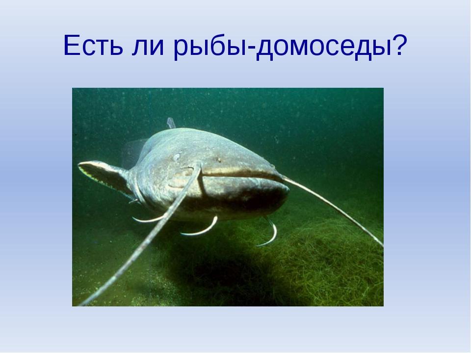Есть ли рыбы-домоседы?